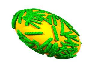 green poxvirus