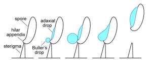 Spore catapult