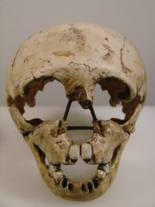Homo_neanderthalensis_face_(University_of_Zurich)