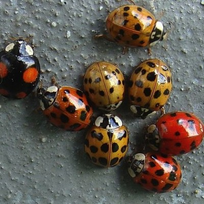 TWiP 55: A ladybird's weapon