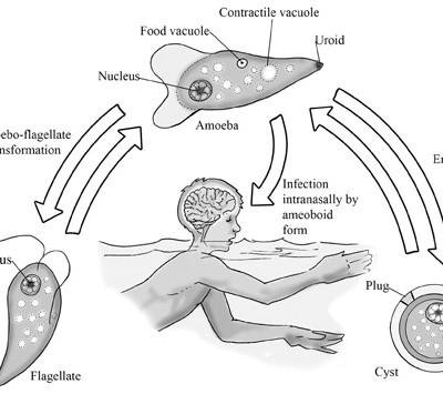 TWiP 39: I encyst, said the amoeba