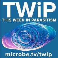 TWiP 196: Naked eye entomologist