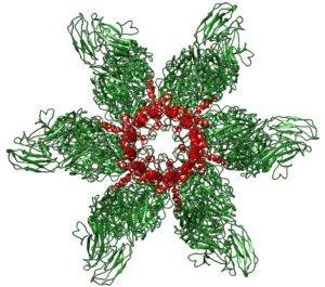 Calicivirus portal