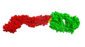 antibody bound to Zika virus E
