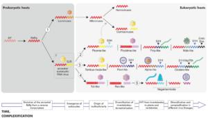RNA virus evolution