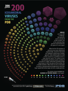 200 icosahedral viruses