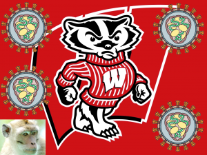 TWiV 260: Badgers go viral