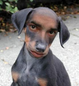 dog_human