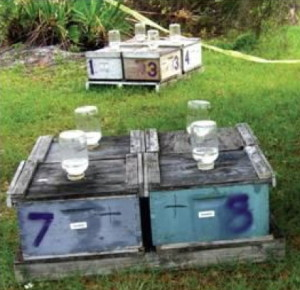 hive and feeding bottles