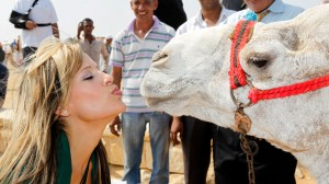 kissing a camel