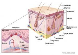 merkel carcinoma