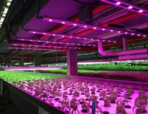 Urban Agriculture 12: FarmedHere