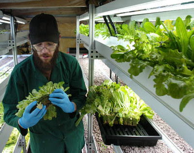 Urban Agriculture 8: Green Farms A&M