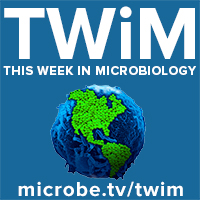 TWiM 233: Antivirals made by bacteria