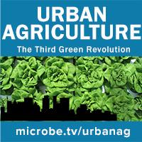 Urban Agriculture 29: Gotham Greens